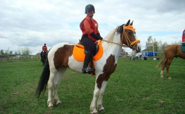 Катание на лошадях СПб