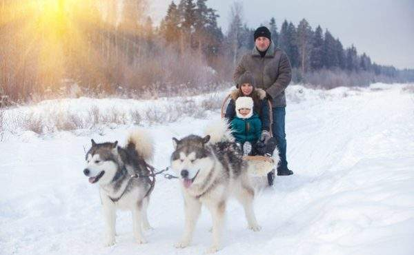 Катание на хасках в Ленинградской области